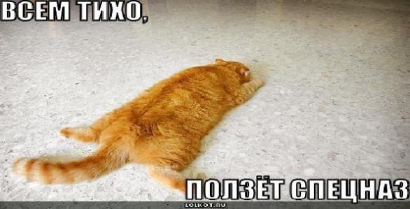 Увлекательная жизнь Рыжего кота.