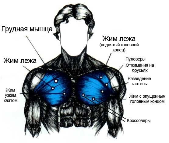 Упражнения для груди для мужчины в домашних условиях