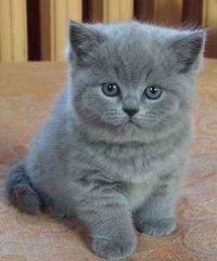 Dasha Cat, 11 августа , Тула, id59111792