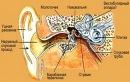 Строение уха человека Та же ситуация с глазом и другими органами тела, которые совершенны сами по себе...