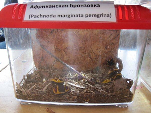 http://cs9599.vkontakte.ru/u1584628/104173831/x_cc1de25a.jpg