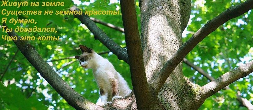 http://cs9605.vkontakte.ru/u114995881/127270969/y_193d724b.jpg