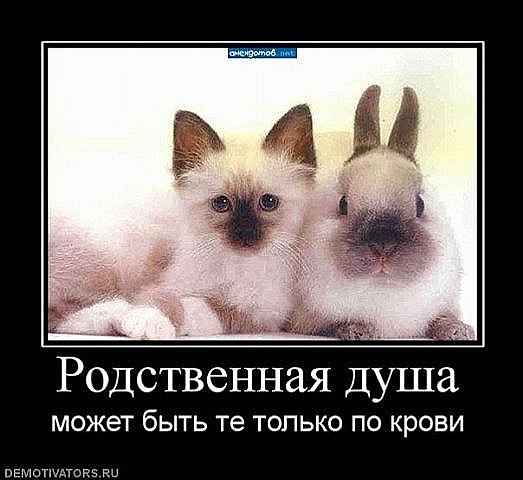 x_4536869e.jpg