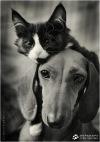 Государство для животных ЛакостДюрел. У нас уже живут ваши друзья! Заселяйтесь и вы))