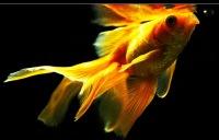 Золотая Рыбка, 25 мая 1977, Винница, id152203138