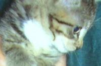 Private Life, 29 июля 1999, Глазов, id150066825