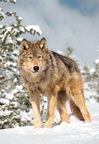 Волк Прелестный, 15 февраля , Винница, id85814274