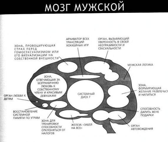 Картинка мозг женщины прикольный