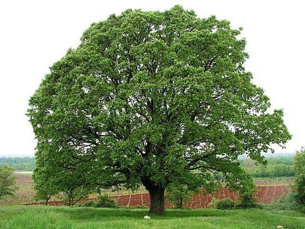 Бисероплетение деревьев тоже