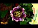 Вечность...Цветы в природе. Музыка для релаксации
