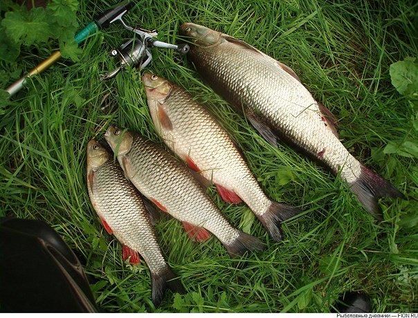 где сейчас ловится рыба в омской области