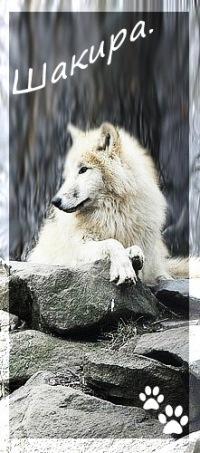 ♦♦шакира Волчица♦♦, 22 февраля , Санкт-Петербург, id116387498