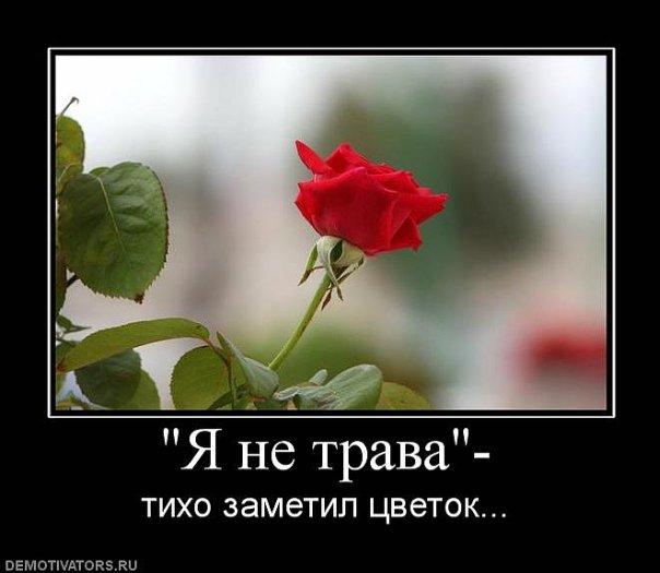 http://cs9645.vkontakte.ru/u36724697/112221452/x_7ecc4d5b.jpg