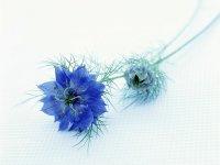 Цветочек Новая  бабка, 11 апреля , Николаев, id87039159