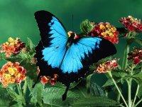 Vikucia Butterfly, 25 ноября , Волгоград, id77329674