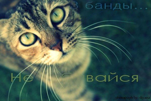 http://cs9651.vkontakte.ru/u125183371/-14/x_a5c84811.jpg