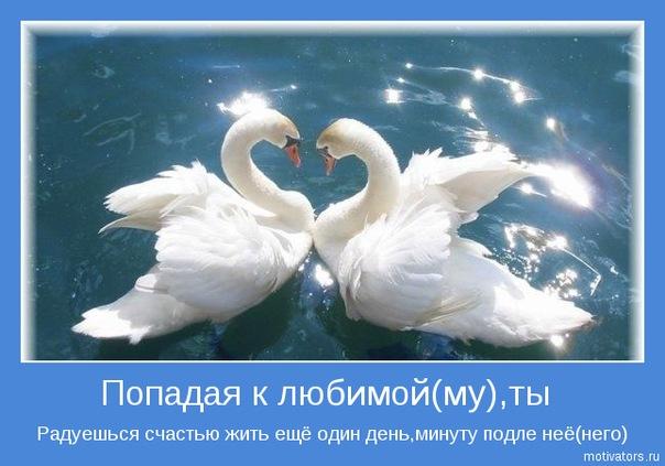 схема лебедей не свадьбу.