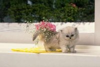 Cat Cat, Москва, id74674367