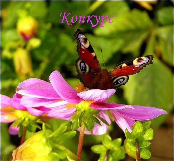 Фото девушки на природе любительские подгляд 24 фотография