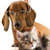 Клуб любителей домашних животных