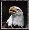 Kl Falcon, 22 сентября 1989, Волгоград, id86500906