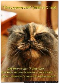 Алексей Малюта, 29 ноября 1986, Одесса, id56089570