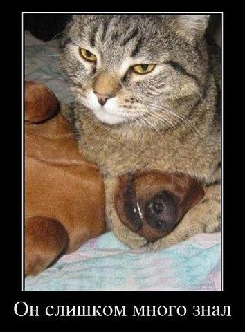 Ютуб животные смешные