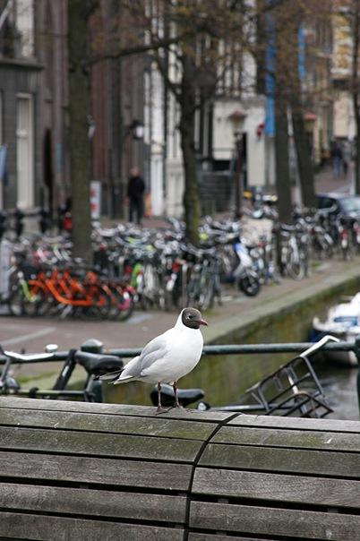 Прогулка по Амстердаму
