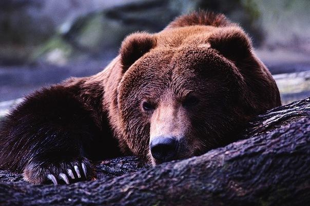 Молодой медведь доехал в центральную часть