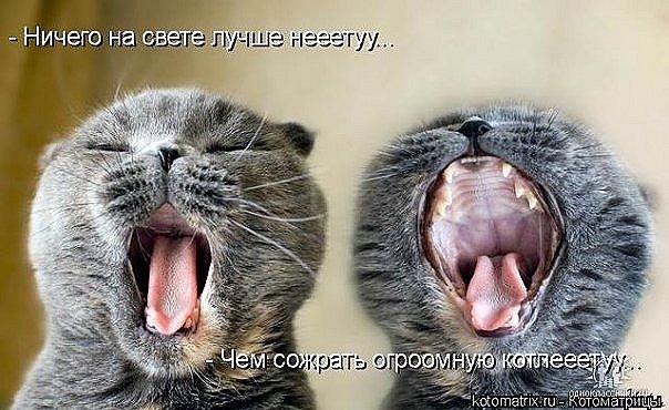 http://cs9695.vkontakte.ru/u16920598/42166413/x_9c209740.jpg