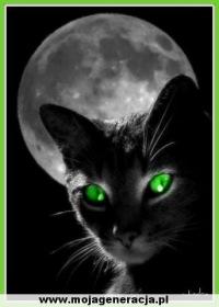 Стать котом во сне