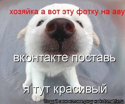 Картинки винкс на аву вконтакте Жизнь ...: ifthen.pp.ua/kartinki-vkontakte-na-avu.html