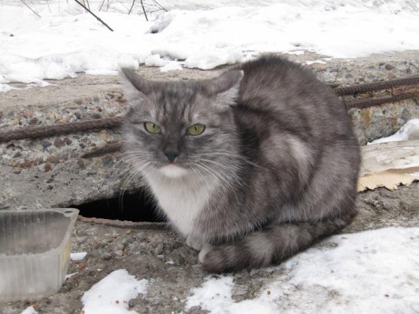 Кошки X_178f6881