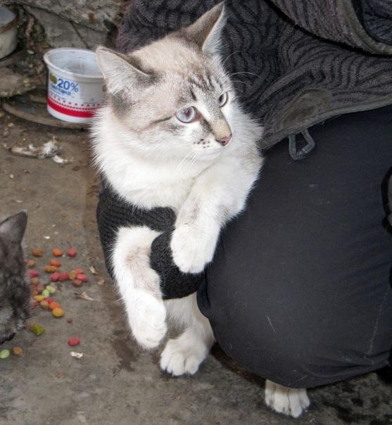 Кошки X_799b0e52