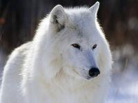 Белый Снег, 14 марта 1996, Камень-на-Оби, id131508197