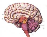 Мой Мозг, 25 мая , Донецк, id93772006