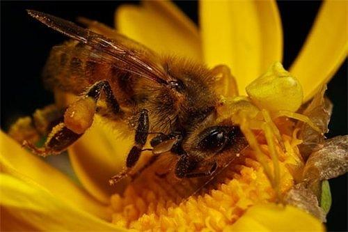 Тайна старинного мёда или чем питались наши предки