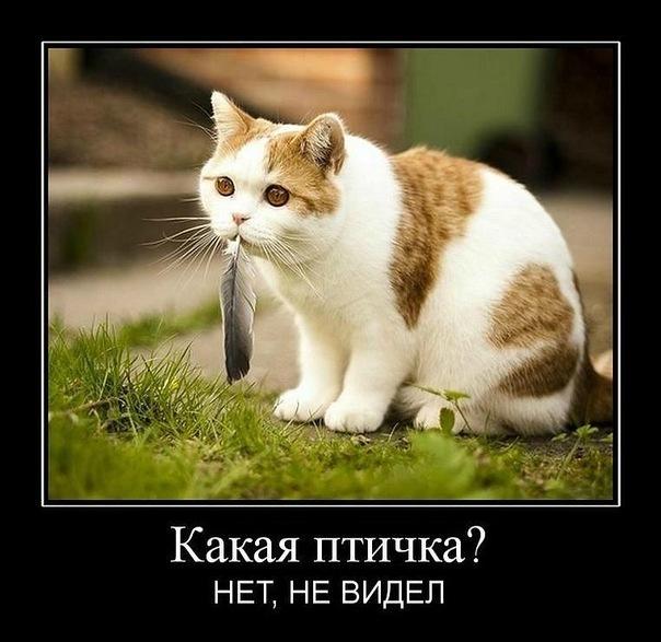 Котоматриця!)))) - Страница 6 X_05447be9