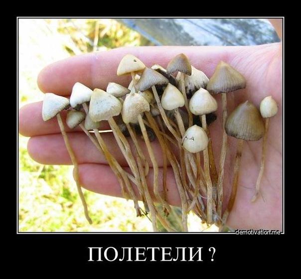 Псицолобиновые грибы заказать