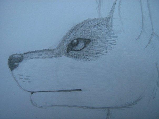 Урок: Рисуем волка. Секрет рисования шерсти.Простенький урок X_1af3d5e7