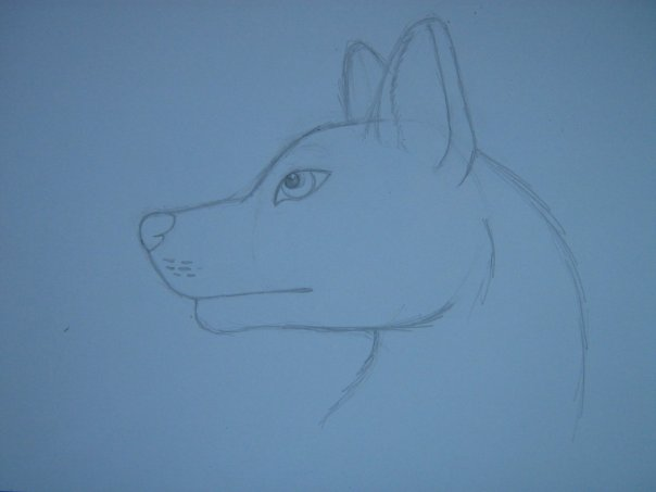 Урок: Рисуем волка. Секрет рисования шерсти.Простенький урок X_25b3bd6f