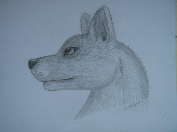 Урок: Рисуем волка. Секрет рисования шерсти.Простенький урок X_64925dc5