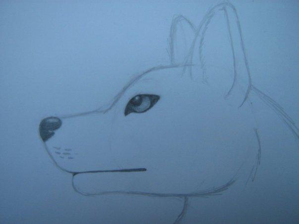 Урок: Рисуем волка. Секрет рисования шерсти.Простенький урок X_6af7b480