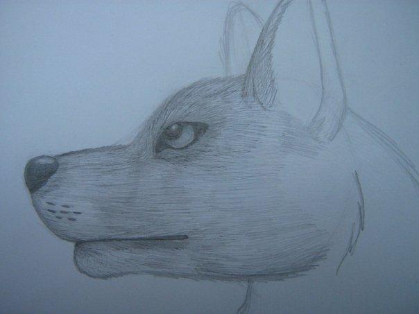 Урок: Рисуем волка. Секрет рисования шерсти.Простенький урок X_8ecaff1e