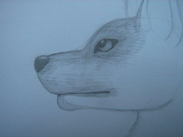 Урок: Рисуем волка. Секрет рисования шерсти.Простенький урок X_931c4a1f