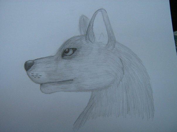 Урок: Рисуем волка. Секрет рисования шерсти.Простенький урок X_98bb26d4