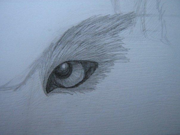 Урок: Рисуем волка. Секрет рисования шерсти.Простенький урок X_9fd05346