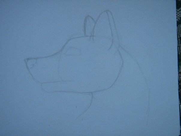 Урок: Рисуем волка. Секрет рисования шерсти.Простенький урок X_c4c35d4e