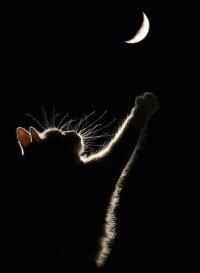 Чёрная Кошка, 19 мая , Реж, id40772929