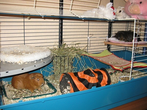 Как сшить гамак для морской свинки